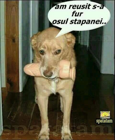 Osul Stapanei