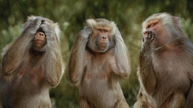 Poveste trei maimute