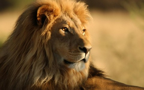 Dieta Leului