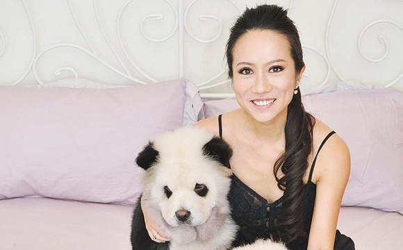Panda Dog Romania