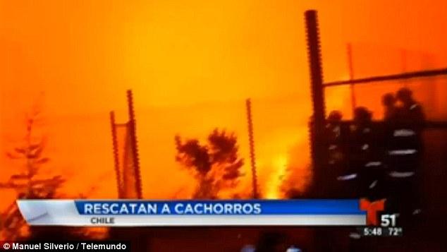 Incendiu padure Chile