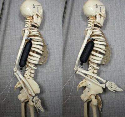Muschi pentru roboti