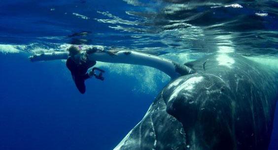 Balena salveaza un scafandru de un rechin