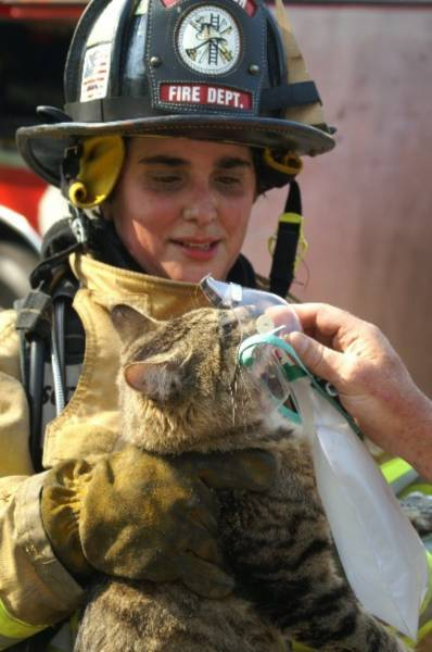 Pisica masca de oxigen