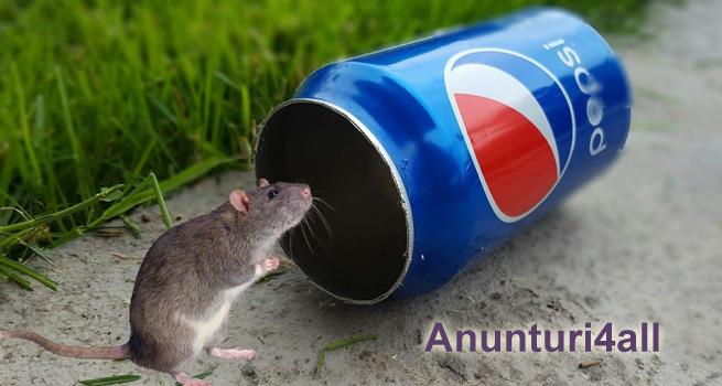 Cursă pentru şoareci făcută în casă