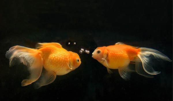 Caractersitici Zodia Peşti