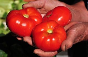 Alegerea rosiilor pentru consum si conserve