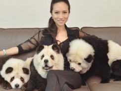 Ultima moda in China: cainii panda