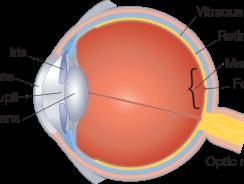 Ce este retina?