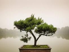 Calea Zen: 10 principii pentru echilibrul vietii