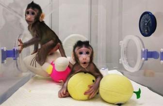 Clonarea umană: un orizont real