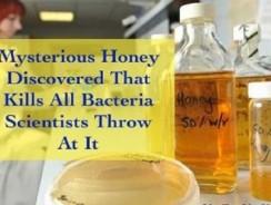 Miere misterioasa care ucide toate bacteriile