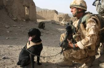 Un militar a scris o carte despre cainele sau de lupta