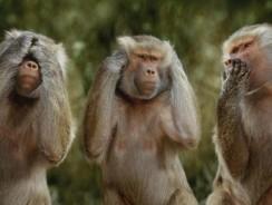 Cele trei maimute: nu vad, nu aud, nu vorbesc
