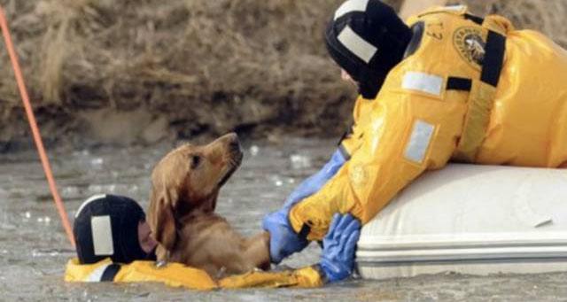 Pompieri care şi-au riscat viaţa pentru a salva animale